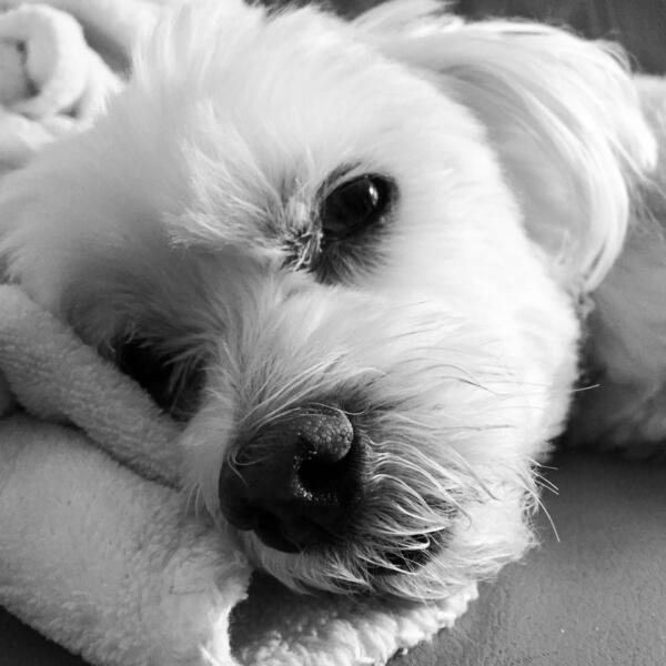 black and white photo of dog