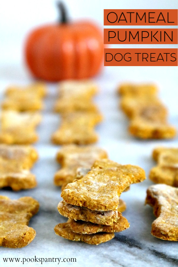 Easy, homemade oatmeal pumpkin dog treat recipe