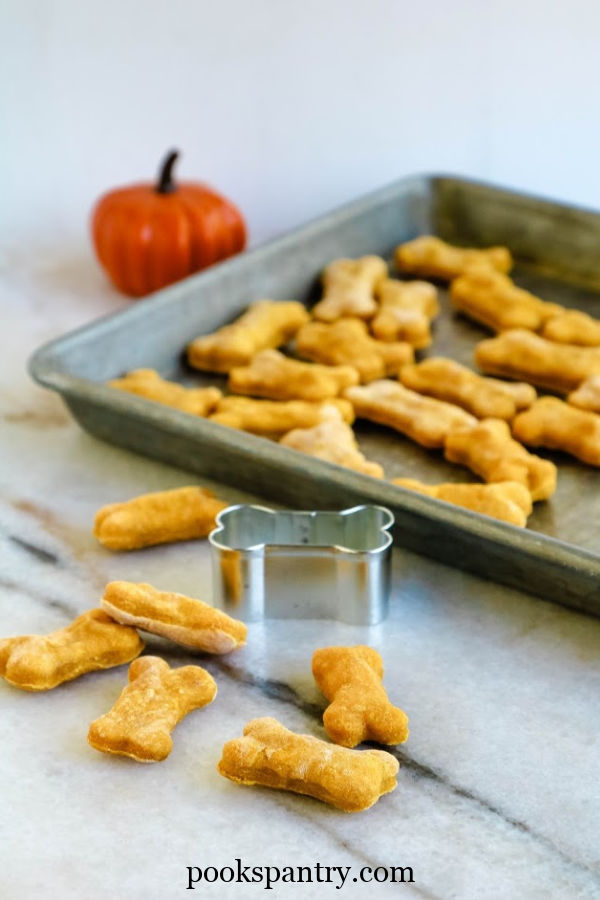 soft pumpkin dog treats with bone shaped cookie cutter