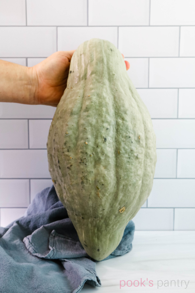 Whole Hubbard squash standing up in front of white tile background.